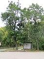 Drvece u parku (8).jpg