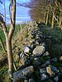 Dry stone wall superseded by fence - geograph.org.uk - 1605058.jpg