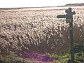 Dunwich Marshes - geograph.org.uk - 11141.jpg