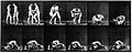 "E. Muybridge ""Animal locomotion"", plate Wellcome L0018594.jpg"