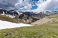 Early season wildflowers on Beartooth Pass (48290720801).jpg