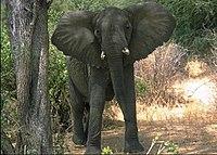 Elefante Lake Manyara Park