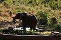 Elephant visitor at Tarangire Treetops (2) (28060955354).jpg