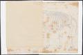 Elephas africanus - skelet - 1700-1880 - Print - Iconographia Zoologica - Special Collections University of Amsterdam - UBA01 IZ22000100.tif