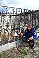 Eleveurs de huskies dans l'Oblast de Kostroma (5).jpg