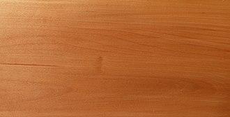 Sorbus torminalis - Wood of Sorbus torminalis