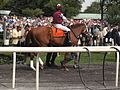 Elusive Warning at True North Stakes.jpg