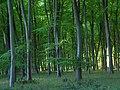 Embley Wood - geograph.org.uk - 442874.jpg