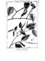 Encyclopedie volume 5-156.png