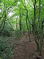 Epping Forest 20170727 112950 (49374799427).jpg
