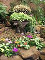Ernest Thorp Orchid House 1 12 09 2010.JPG