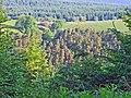 Esgair-fwyog, Crychan Forest - geograph.org.uk - 190386.jpg