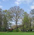 Espeln - Eiche am Braukenhof.jpg