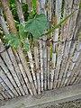 Estany de la Murtra P1480561.jpg