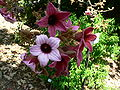 Fale - Giardini Botanici Hanbury in Ventimiglia - 566.jpg