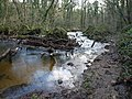 Fallen trees in the Bovey - geograph.org.uk - 1084576.jpg