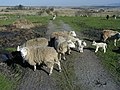 Farm Animals in a farm field - geograph.org.uk - 19200.jpg