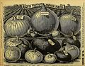 Farm and floral guide - seeds, plants, bulbs, fruits and seed potatoes (1896) (20549089341).jpg