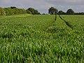 Farmland, Micheldever - geograph.org.uk - 433485.jpg