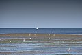 Faune marine Sayada, janvier 2018 - DSC 7508.jpg