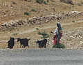 Female Shepherd with goats in Tunisia.jpg