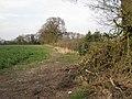 Field north of Manor Lane - geograph.org.uk - 1805799.jpg