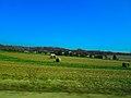 Field of Round Bales - panoramio (3).jpg