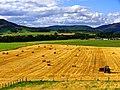 Fields - panoramio (26).jpg