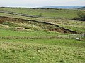 Fields above Moss Kennels - geograph.org.uk - 1018997.jpg