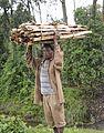 Firewood, Kafa, Ethiopia (11267525826).jpg