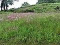 Fleurs Croze (1).jpg