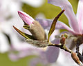 Flickr - Michael Gwyther-Jones - Spring (4).jpg