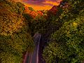Flickr - paul bica - dark forest.jpg