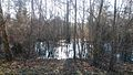 Flood barrier in a forest.jpg