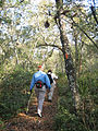Florida Trail-ONF.jpg