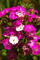 Flower-104.jpg