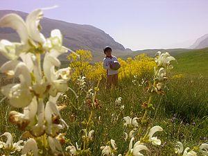 Lar National Park - Yellow plain in Lar National Park.