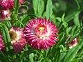 Flower 228.jpg