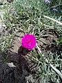 Flower image 5.jpg