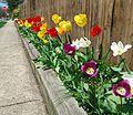 Flowers along sidewalk with stop sign.JPG