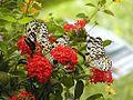 Flowers plants butterfly butterflies.jpg