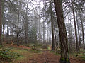 Foggy Wood (5304486888).jpg