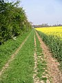 Footpath, hedgerow and oilseed rape field - geograph.org.uk - 402793.jpg