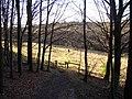 Footpath in North Spring Wood, Thurstonland, Yorkshire - geograph.org.uk - 119020.jpg