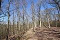 Forêt Départementale de Beauplan à Saint-Rémy-lès-Chevreuse le 14 mars 2018 - 20.jpg