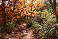 Forest-trail-fence-high-point-north-fork-mountain - West Virginia - ForestWander.jpg