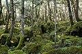 Forest in Yatsugatake 48.jpg
