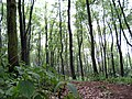 Forests in botanical garden - panoramio.jpg