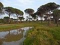 Foret Domaniale de la Colle du Roulet - panoramio.jpg
