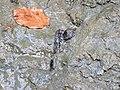 Fosilni ostaci, Spomenik prirode Prebreza, Srbija (7).jpg